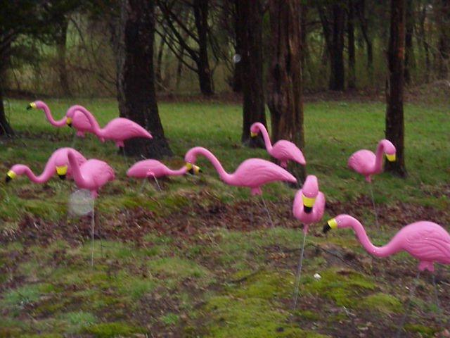 field of plastic flamingos